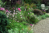 An Established Cottage Garden